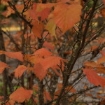 narbeck wetland, autumn foliage, nature hikes for kids, everett